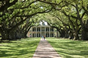 The walk up to Oak Alley Plantation